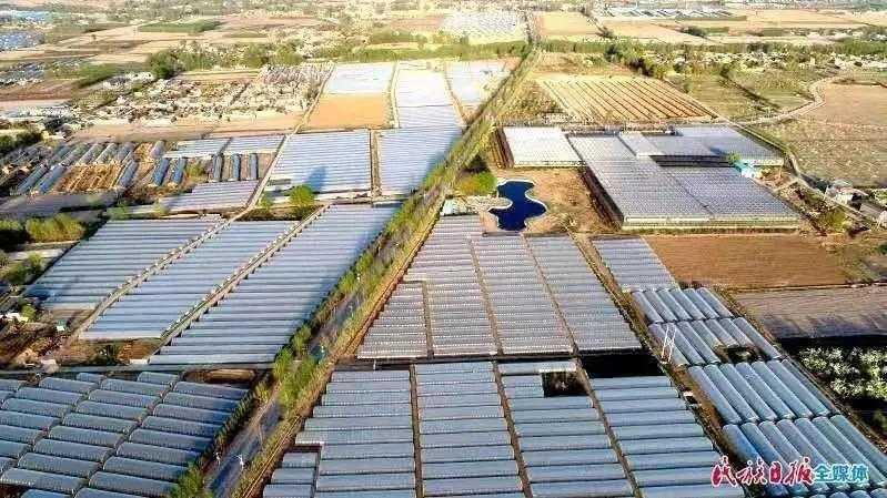 沃野千里涌春潮――2020年甘肃省临夏州农业农村工作综述