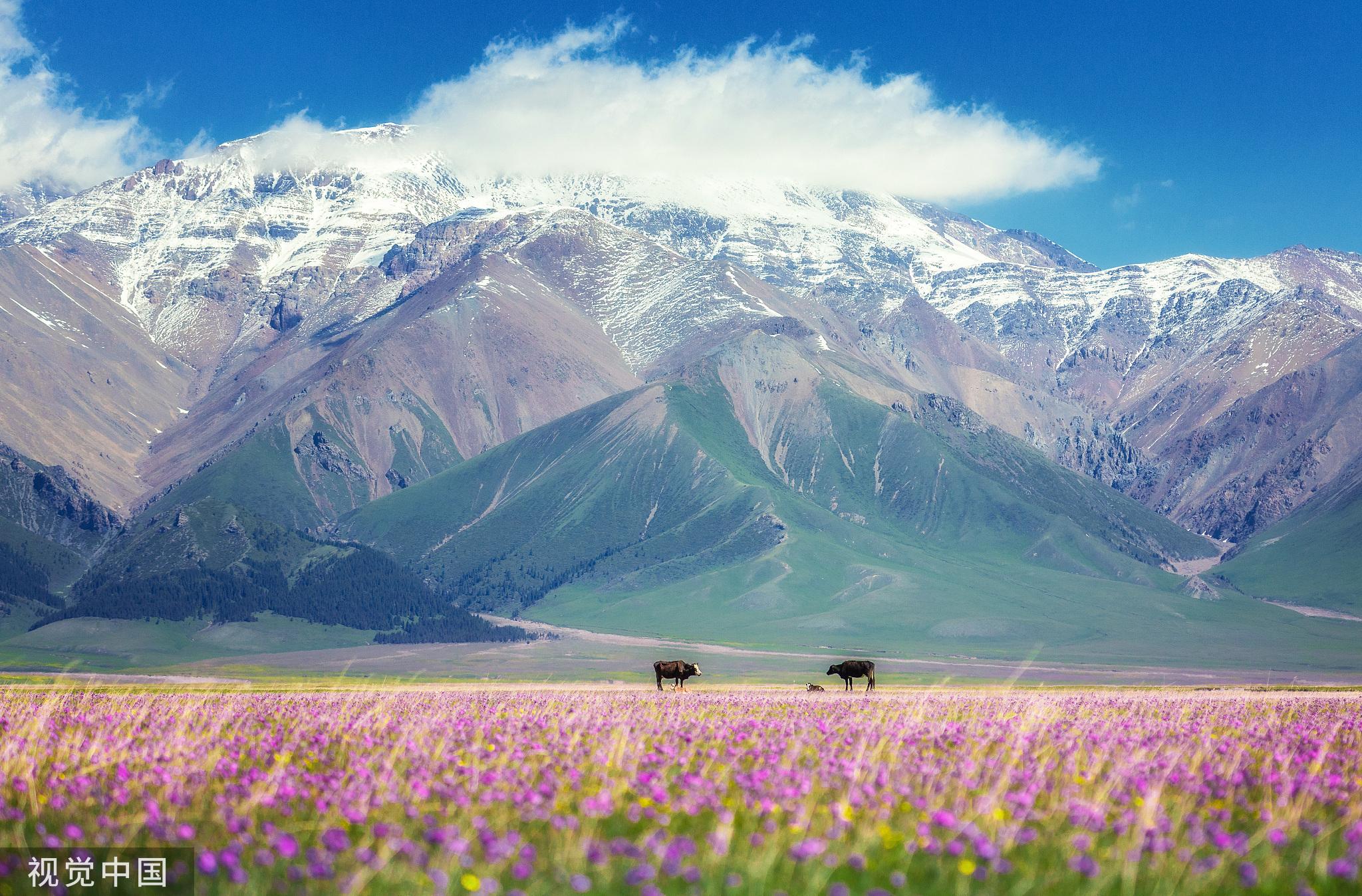 初夏,湖边的野花相继盛开,繁花点缀在绿色的草地上,与远处的雪山相映成趣。这种景色一年只有大概两个月的时间能欣赏到。